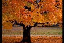 Autumn / herfst... / Classroom ideas for autumn.