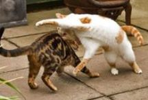 Cat Kwon Do / These furry friends are the true martial arts masters.