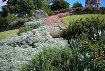 Watersaver Landscaping / Drought-tolerant plants appropriate to South Texas  / by San Antonio Botanical Garden