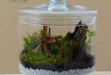 Beautifull tiny terrariums / by Fantasy Forest Factory