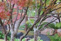 Kumamoto En Japanese Garden / Exquisite Japanese Garden - a gift from Sister City Kumamoto, Japan to San Antonio in 1988 / by San Antonio Botanical Garden