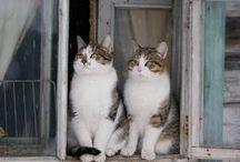 finestre..e gatti...