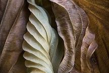 Patterns and Shapes in Nature