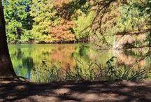 Fall Color at the Botanical Garden / Beautiful fall color at the Garden / by San Antonio Botanical Garden