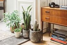 Indoor Potplant Ideas