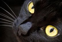 gatti BLACK