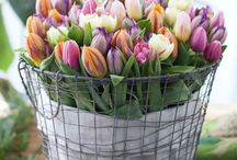 Flowers- Floristik