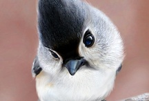 Birds / by cherrie ullom
