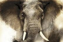 Elephants / by cherrie ullom
