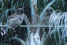 I LUV Owls (& Their Feathered Friends)! / by I LUV Winter Park