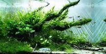 aquarium - planted