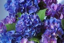 Flowers / by Susan Garnett