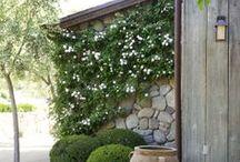 Backyard/Frontyard Space / by Roisin MacManus