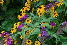 WUHS - Flowers, Gardening, & Outdoors / Discover Gardening, floral, and outdoor projects and by Whats Ur Home Story