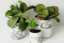Indoor Garden / Houseplants, decorating with plants, indoor garden.  / by Christa | Winsome & Green