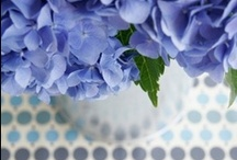 Periwinkle ~ French blue