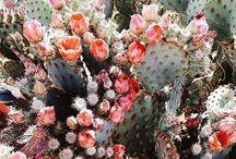 Flowerful world