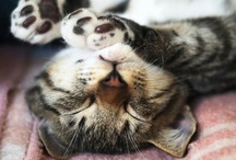 little ball of fur  / Cats have it all - admiration, an endless sleep, and company only when they want it.  Rob McKuen