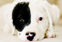 man's best friend  / Don't accept your dog's admiration as conclusive evidence that you are wonderful.  Ann Landers