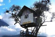 Casa sull'albero / Abitazioni meravigliose sugli alberi