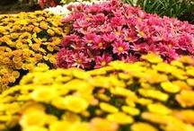 Virágok - Flowers / Virágok Sok-sok virág itt: http://balkonada.cafeblog.hu/