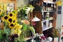 Virágüzlet - Flowershop / Virgbolt, virágüzlet berendezés, működtetés További hasznos nézni és olvasnivalól virágüzlet témában: http://viragutazo.hu/temak/viragkoteszet/