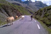 The Cycling / We are in the midst of some of the most famous and mythical cols of the Tour de France: Col du Galibier, Col D'Izoard, Alpe D'Huez, Col du Lautaret...the start of the climb all within a few km's warm-up ride from the hotel.