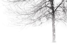 winter //