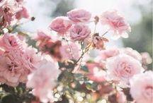 Flowery path
