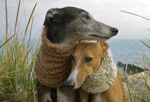 Shades of Greyhounds / I love Greyhounds. If you are thinking about getting a dog, please look into adopting one (or more) of these sweet, gentle creatures. (((♥))) / by Jo =^,^= Allen