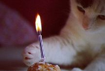 Today is ME-OW Birthday / Happy Birthday! purrrrrrr.... / by Jo =^,^= Allen
