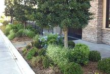 Commercial Landscape Designs / Shades of Texas designs eye-catching, inviting looks for commercial buildings.