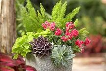 Spectacular Succulents / Succulents are not only charming but extremely water-wise plants and grow well in the California climate.