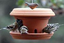 Feed the Birds / Bird feeders, bird baths, and more!