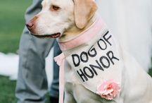 Wedding Dogs / All the wonderful moments we share on the big day with man's best friend.
