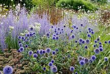 Perennial meadows