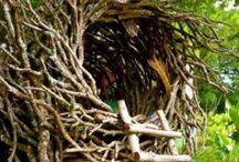 Tree-houses