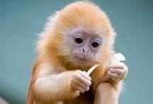 We Love Monkeys / ¡Descubre y comparte las fotos de nuestros changos! <3