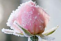 Winter garden ~