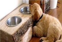 Pet World / Pets, Animals, Cats, Dogs, Animal Furniture, Pets Furniture