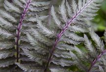 ferns / by mary louise