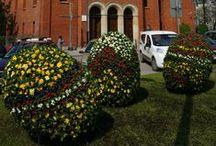 Kwiatowe rzeźby / Oryginalne i kolorowe ozdoby gliwickich skwerów