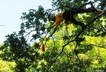 III Mistrzostwa Polski w Wspinaczce Drzewnej / W dniach 7-8 czerwca w gliwickim Parku Chrobrego odbywały się III Mistrzostwa Polski w Wspinaczce Drzewnej