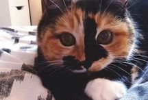 cat emphasis