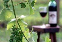 Wine-Cellar / Винный погребок
