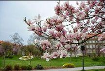Wiosna w Gliwicach / Wiosna, ach to TY!