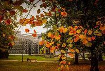 Jesień w Gliwicach