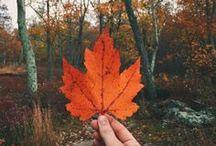 Autumn / Automne