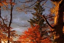 Photo::Nature