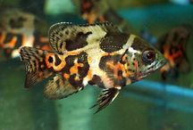 Fish (freshwater) and aquarium / by Alex Rain